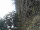 2014-03-17 Drzewo w Tęczkach